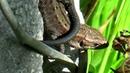 Ящерицы около родника