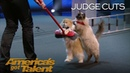 The Savitsky Cats: Trained Cats Perform Amazing Tricks With Catitude - America's Got Talent 2018