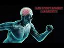 Как спорт влияет на мозг? Ася Казанцева на QWERTY
