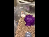 The most scared hamster in the world
