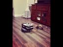 Ferret Goes For a Vacuum Robot Ride    ViralHog