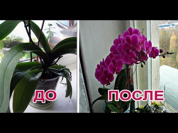 Как заставить цвести орхидею Ответ есть метод работает на 100%
