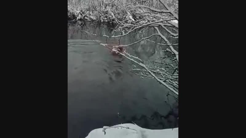 Федор Емельяненко принимает водные процедуры