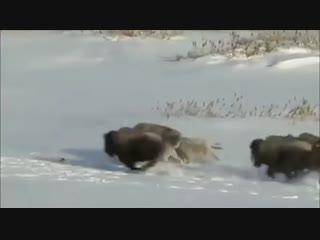 Рептилоид - Волки.mp4