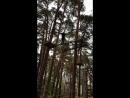 Тарзан-парк 1