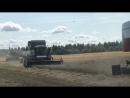 Уборка зерновых в Ломоносовском МРЛО