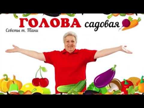 Голова садовая - ПОЛЕЗНО! Подкормка грунтовых томатов