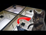 CAT in AUTOMATIC ESCAPE ROOM - Can it SOLVE ALL THE PUZZLES