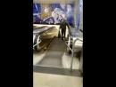 Дед-атлет из Питера шагает по эскалатору как по беговой дорожке