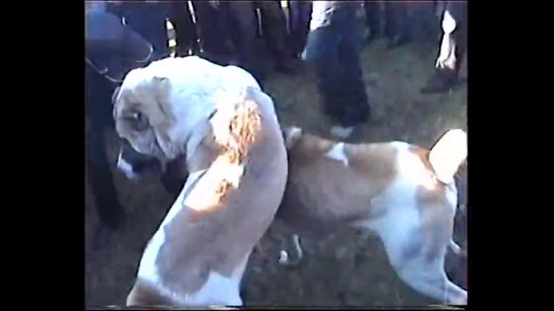 Собачие бои Грузия Цалка 17.11.2012г част 2