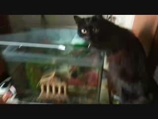 Кеша пьеть из аквариума