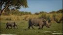 Возвращение носорогов - [HD 720]
