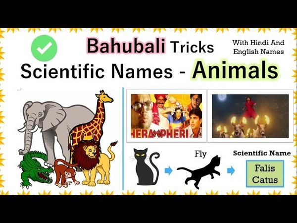 Tricks - Important scientific names of animals for SSC CGL l NDA | CHSL | Railway or any exam