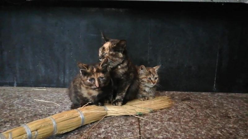 Котята хотят жить. Москва