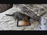 Бармалей и мышь