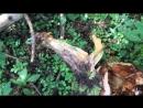 И пошли они в лес за грибами))🌲🍃🌳🍂