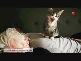 Джулиан Ассанж лишился кота