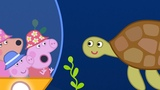 Peppa Pig New Episodes - The Great Barrier Reef - Kids Videos