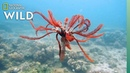 Feather Stars and Their Animal Invaders Nat Geo Wild