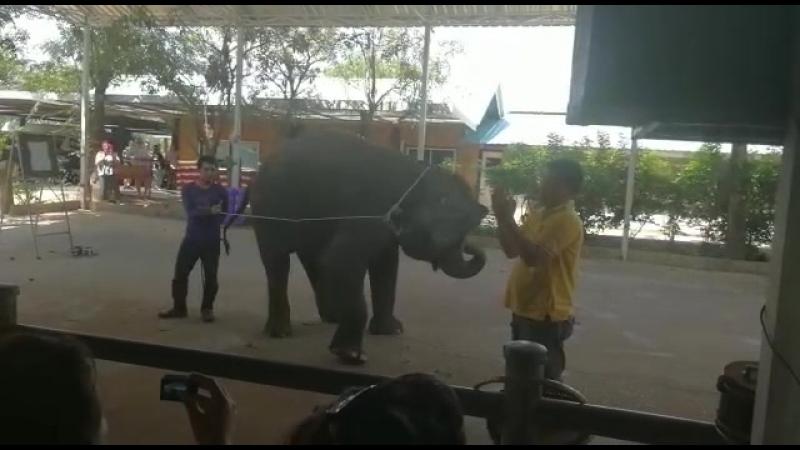 Слоник Пикассо в Тайланде