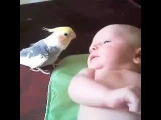 Как попугай малыша спать укладывал (ВоК)