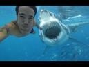 Gerçek Köpekbalığı Saldırıları