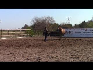 Horse_biting__solving_the_dangerous_behavior_issue_with_Mike_Hughes__Auburn_California.mp4
