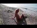 Девушка разделась на пляже Голая нудистка на море Танцует стриптиз 240