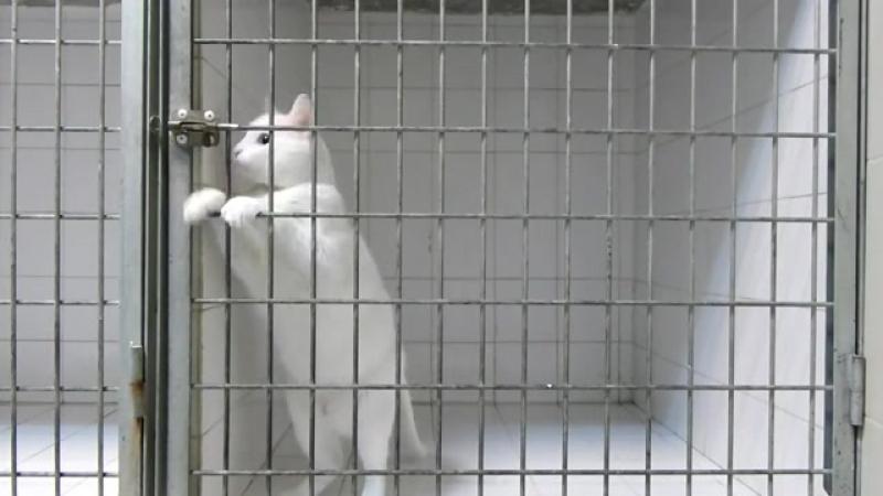 Умный cat