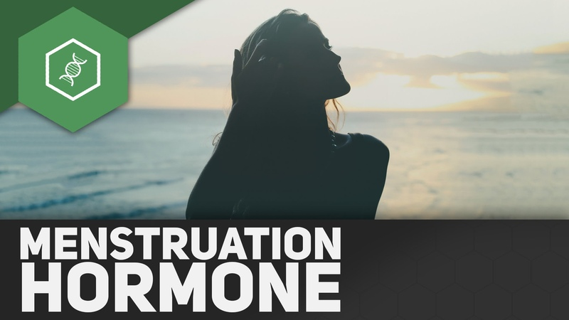 LH, FSH, Östrogen, Progesteron: Hormone des Menstruationszyklus
