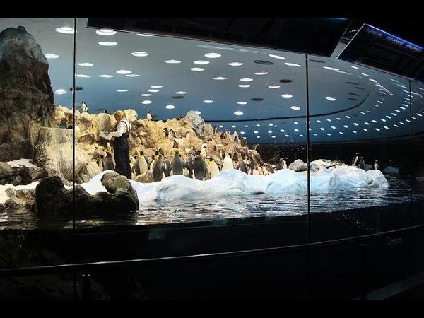 Что находится в толще диска Плоской Земли, там гигантские сотовые пещеры как в огромном УЛЬЕ