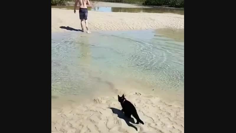 Cat can swim
