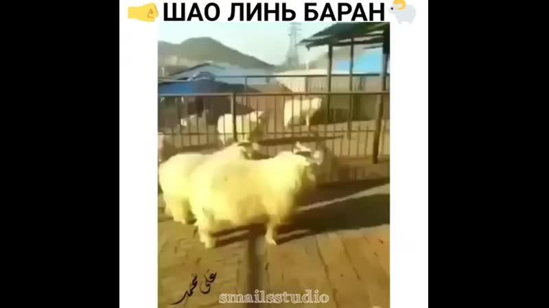 Шаолинь баран