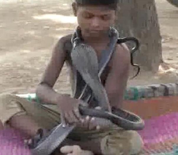 Первоклассник настолько сдружился с 3 кобрами, что ест, купается и спит вместе с ними Семилетний Девиш Адиваси из деревни Патрада в центральной Индии крепко сдружился с тремя кобрами, которых он