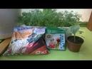 Чем подкормить огурцы Удобрение рассады на балконе