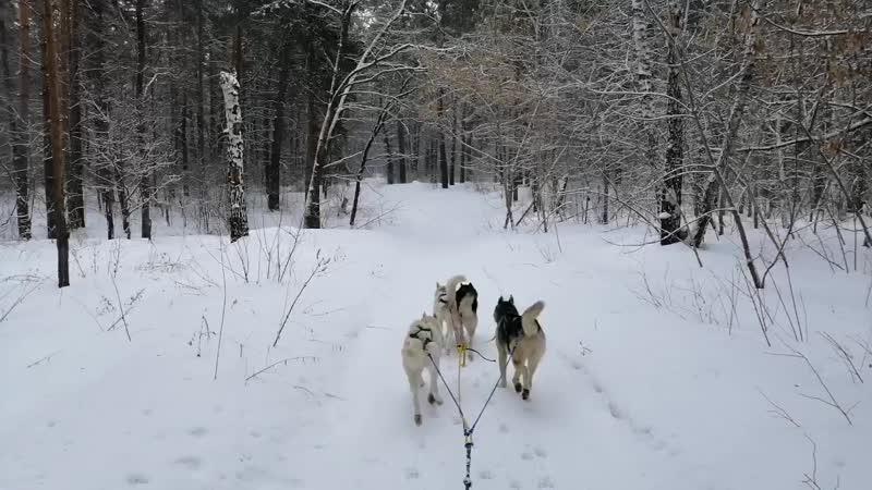 Тренировка Алясок