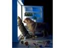 ПОПРОБУЙ НЕ ЗАСМЕЯТЬСЯ - Смешные Приколы с Животными до слез, смешные коты, funny cats 97
