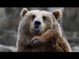 Каких диких животных можно встретить на улицах городов в Прикамье?