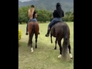 Two girls doing morning exercises on horseback and foot massage