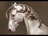 ~ Equestrian sport ~ Взлетай - Burito ~ Конный спорт ~