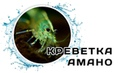 Креветки Амано Amano shrimp Caridina japonica
