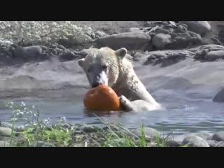 Как животные зоопарка празднуют хэллоуин