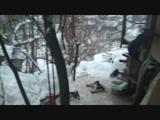 В Чебоксарах на даче обнаружили тела мертвых собак