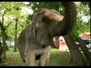 Киножурнал Ералаш • Ералаш №246 Слон