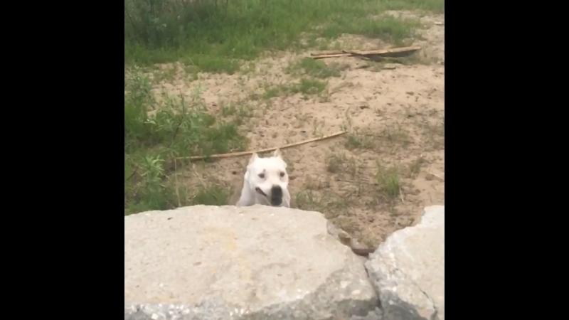 Старушка моя ещё может прыгнуть 😂