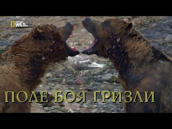 Nat Geo Wild: Хищники Аляски. Поле боя гризли (1080р)