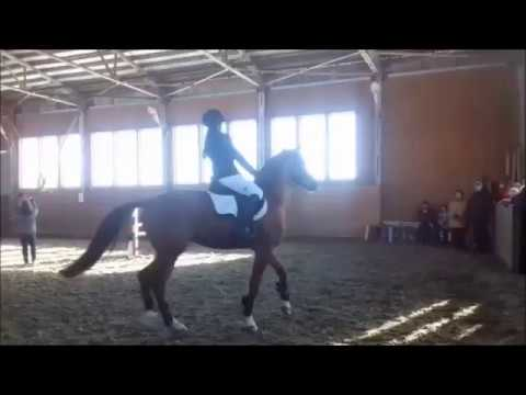 Lotus Show jumping up to 90cm