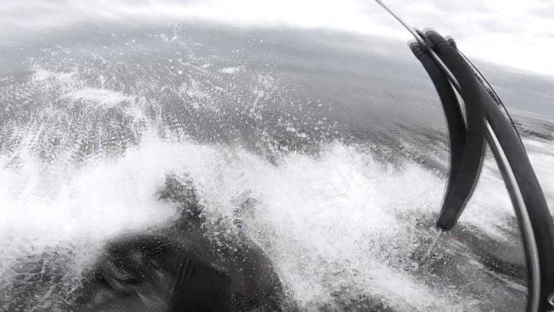 Подводная охота в мутной воде. Владивосток, о Русский.