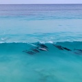 TropicalTapes on Instagram Dolphins flowing through the ocean waves...so beautiful