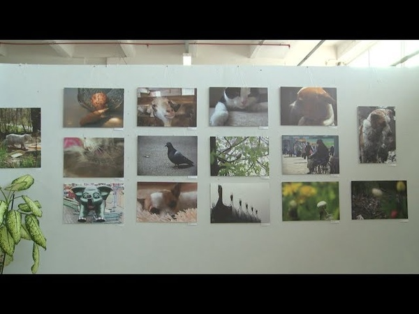 Фотовыставка Открытие в Бийске (Будни, 22.08.18г., Бийское телевидение)